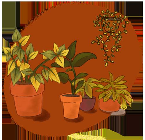plants-obm-services-illustration